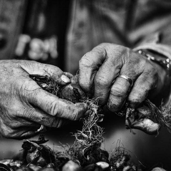 Rianne Noordegraaf portret westfries tuinder zwart wit fotografie
